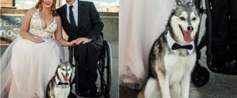 Cachorro desaparece minutos antes do casamento de seus tutores