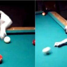 Cachorro faz sucesso em vídeo jogando sinuca, mandando muito bem