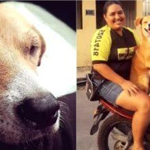 Cachorro sorri feliz ao ser adotado, após viver muitos anos nas ruas