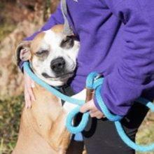 Cão resgatado fica grato e abraça todos que encontra pela frente