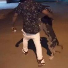 Cão vai buscar seu tutor detido em delegacia por furar toque de recolher