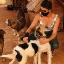 Cuidando sozinha de 70 animais em casa, mulher pede socorro