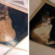 Dono de loja coloca teto de vidro para ver seus gatos e agora eles não param de olhar para ele