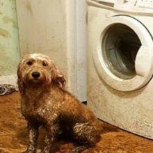 Ela encontrou sua cozinha coberta de lama, depois que seu cão decidiu brincar no meio de uma chuva