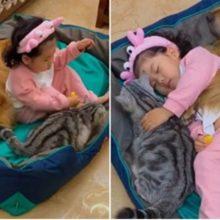 Garotinha tira soneca com seus dois animais de estimação enquanto ela abraça seu gato o seu cachorro abraça ela