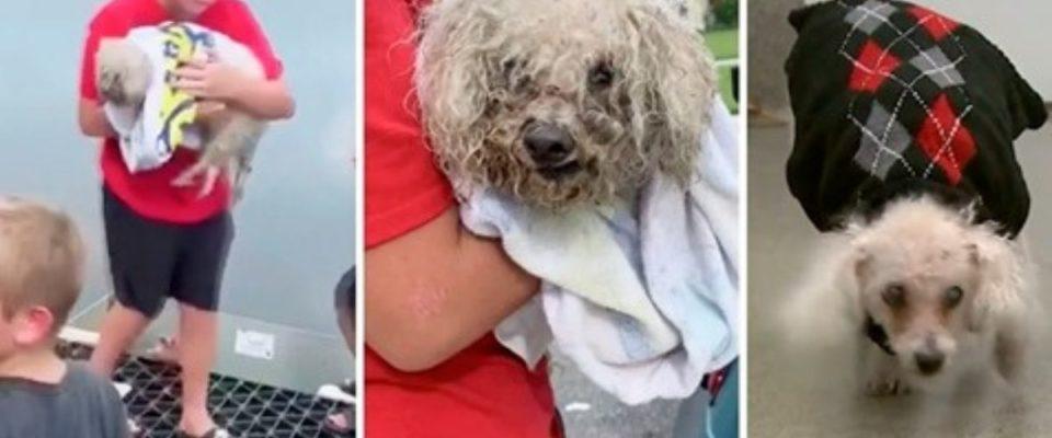 Garotinho De 13 Anos Entra No Esgoto Para Salvar Cachorrinho Idoso