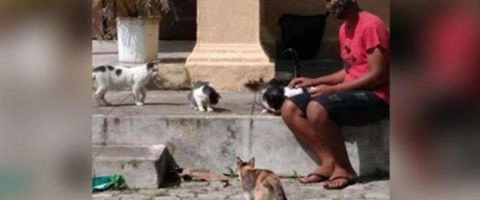 Garoto faz rifa de liquidificador para ajudar gatos abandonados em cemitério