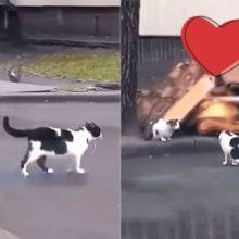 Gatinho apaixonado acha balão azul na rua e pega para dar de presente para gatinha