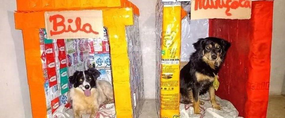 """Homem faz casinhas de cães com caixas de leite para doação : """"Faço de coração"""""""