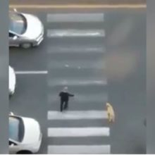 Homem Parou o Trânsito Pra Que Um Cão Assustado Pudesse Atravessar a Pista