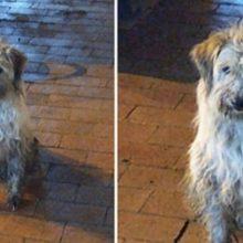 No meio da chuva e tremendo de frio, um cão aparece no posto e rouba seu coração