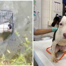 Pescador resgatou cãozinho que encontrou preso em gaiola em um lago e adota ele