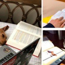 Professora pede que seus alunos enviem fotos de seus cães e gatos fazendo lição de casa, o resultado é adorável