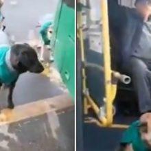 Transporte público contratam cães de rua como companheiros