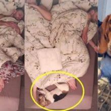 Tutores filmam cão durante a noite e descobrem uma movimentação intensa dele