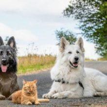 Um gatinho foi criado com dois cachorros e agora pensa que é um cão