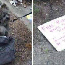 Cachorro abandonado ao lado de lixeira estava com bilhete muito triste