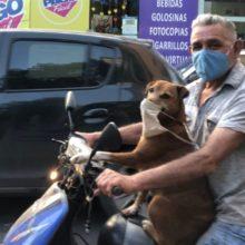 Cachorro com máscara e andando de moto faz sucesso nas redes sociais