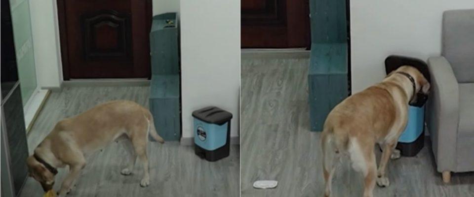 Cachorro comete o crime perfeito e encobre seus rastros de maneira brilhante