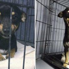 Cachorro de rua é adotado graças ao seu grande e lindo sorriso