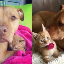 Cachorro é apaixonado por gatos e ganha um filhote de presente
