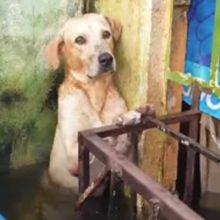 Cachorro é resgatado em enchente fica emocionado e aliviado depois de salvo