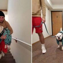 Cachorro finge mancar toda vez que vê as escadas para ser carregado