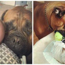Cachorro oferece seu brinquedo favorito quando ouve o choro do bebê