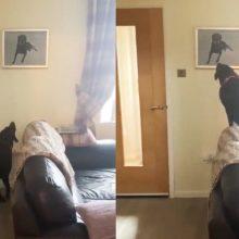 Cachorro se emociona ao ver o retrato do seu querido irmão falecido