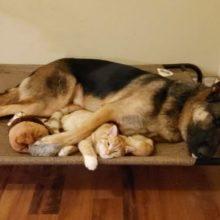 Cachorro se torna o melhor amigo de gatinho chamado Bleu