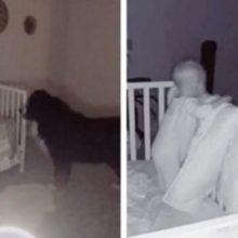 Câmeras no quarto do bebê pegam um cão amoroso checando sua irmãzinha todas as noites