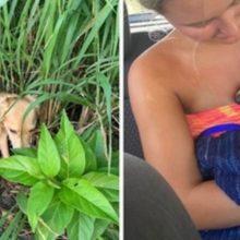 Casal gasta 23 mil para transportar cão abandonado que resgataram em suas férias
