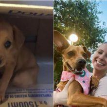 Casal resgatou e adotou um filhote de cachorro abandonado em lixeira