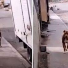 Família tem reencontro emocionante com seu cachorro que estava perdido por 3 anos