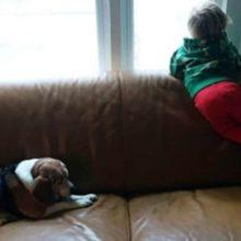 Garotinho de 3 anos escreve carta para seu cachorro que faleceu e é surpreendido com resposta