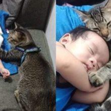 Gatinho ajuda seus humanos a cuidarem do bebê e mostra muito amor