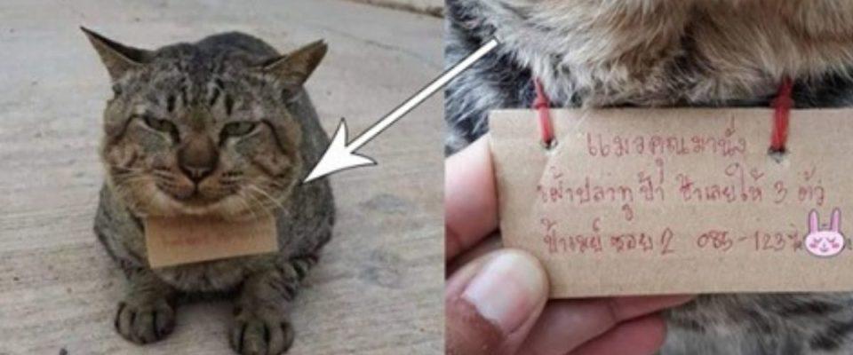 Gato malcriado desaparece e volta com conta para dono pagar