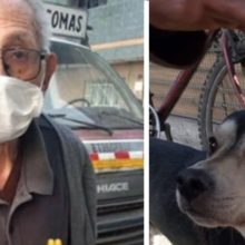 Idoso de 84 anos anda diariamente à procura de seu cachorro