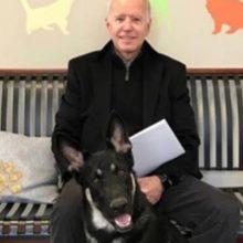 O pastor alemão de Joe Biden será o primeiro cão de resgate a viver na Casa Branca