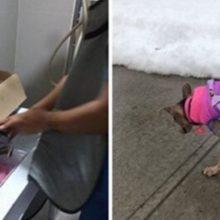 Uma mulher gasta tudo que tem para poder salvar cão ferido encontrado no lixão