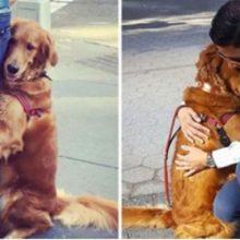 Cachorro amigável para e abraça cada pessoa que vê em suas caminhadas