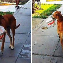 Cachorro com sede sai na rua procurando ajuda com um balde na boca