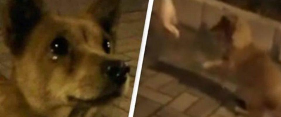 Cachorro de rua chora de alegria após ganhar comida de estranho