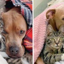 Cachorro resgatado se apaixona por gatinho e amizade deles é muito fofa
