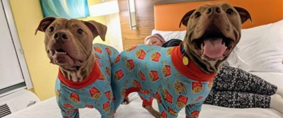 Cachorros de abrigo se vestem com pijama em festa para atraírem supostos adotantes