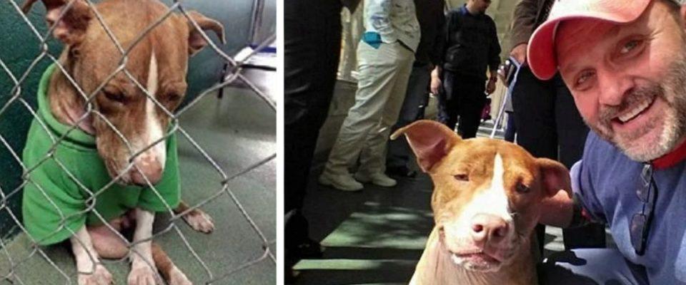 Cão triste de abrigo tinha um único desejo de natal encontrar uma casa cheia de amor