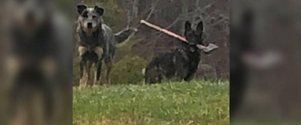 Carteiro encontra um cachorro com um machado no seu caminho