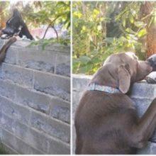 Homem coloca banquinho para que seu cachorro pudesse ver o seu melhor amigo