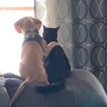 Momento mostra amizade fofa no qual cãozinho coloca a patinha no gatinho