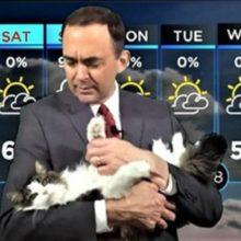 Um gato chamado Betty faz sua grande estreia como Gato do tempo
